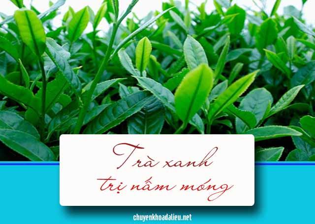 Trị nấm móng hiệu quả với cây thuốc nam trà xanh