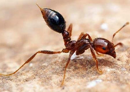 Ngứa ngoài da do côn trùng cắn
