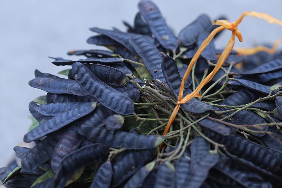 Bồ kết - Thần dược trị nấm da đầu rẻ tiền