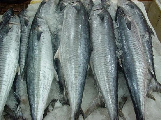 Cá thu - Loại thực phẩm tốt nhất cho người bệnh vẩy nến