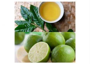 Kinh ngạc tác dụng trị rụng tóc cực nhanh của trà xanh-1