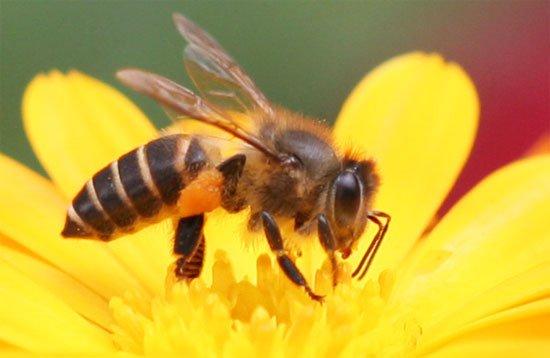 Ong đốt gây nổi mề đay xử lý như thế nào? -1