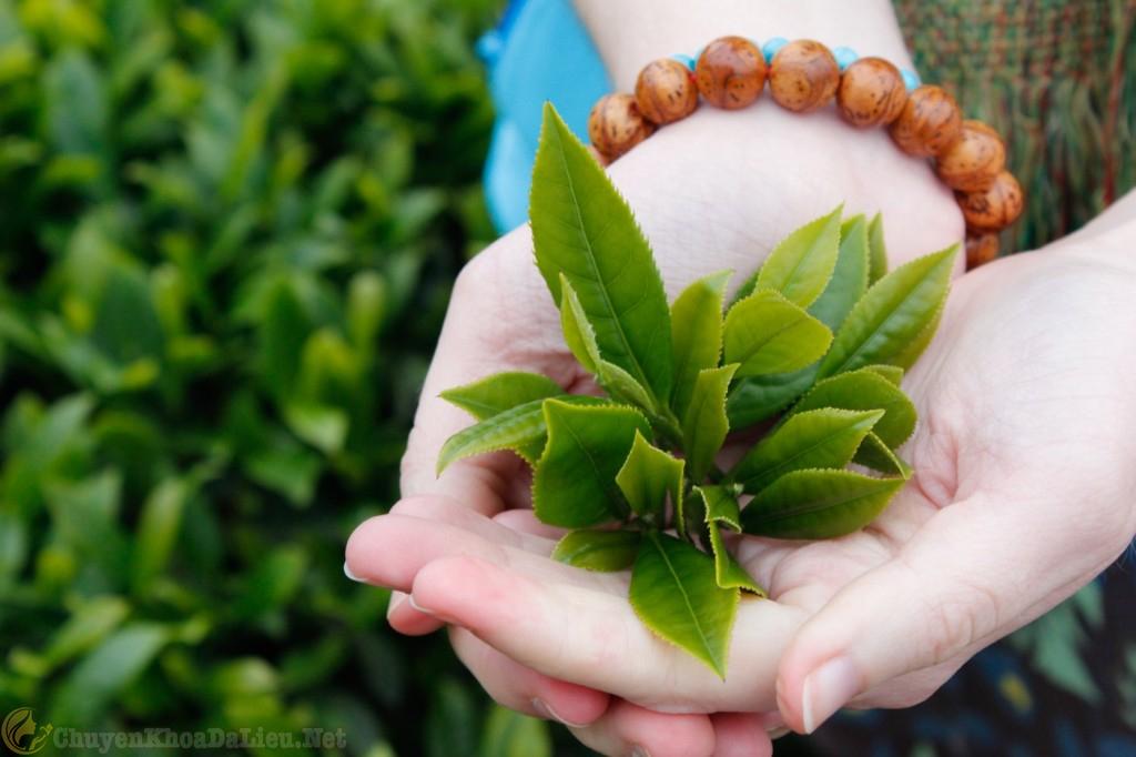 trà xanh trị rụng tóc