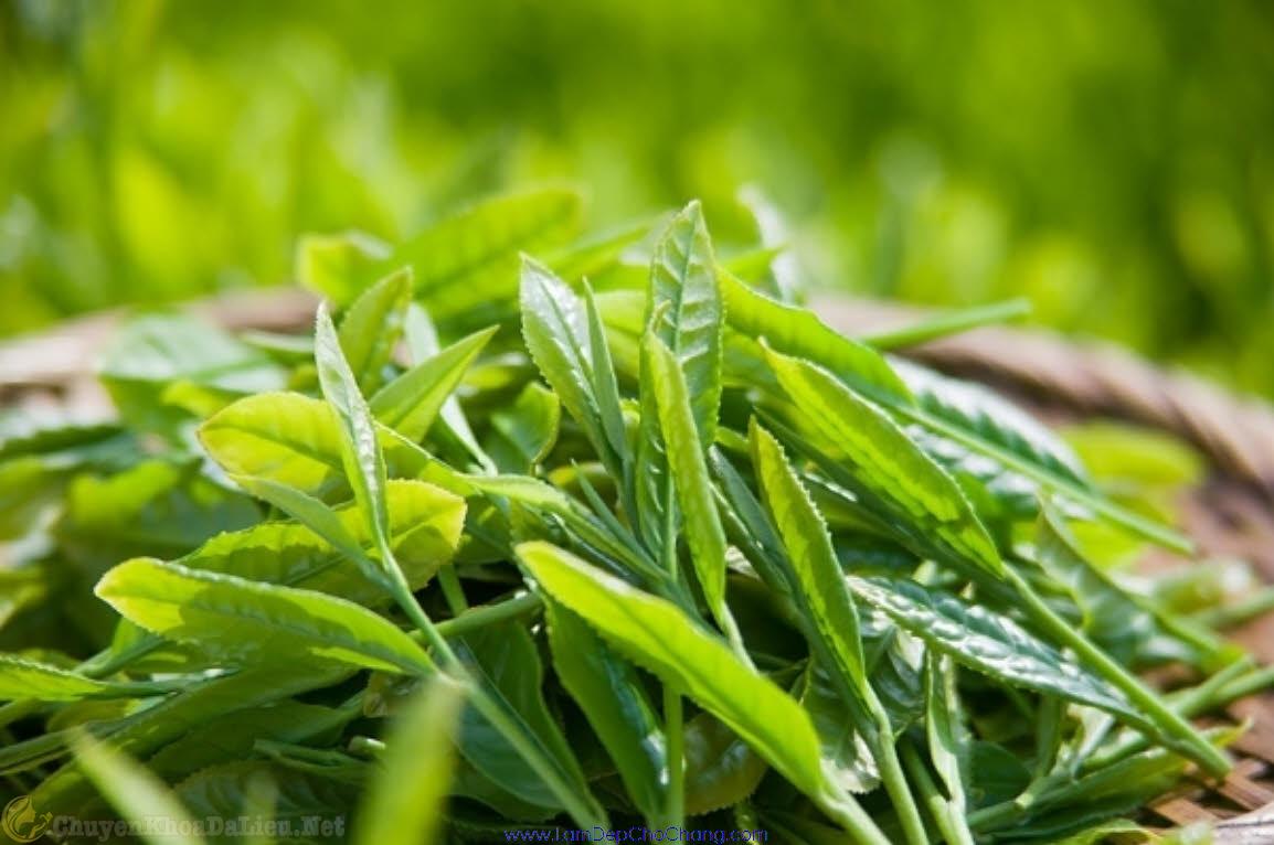 trà xanh chống khô da tốt