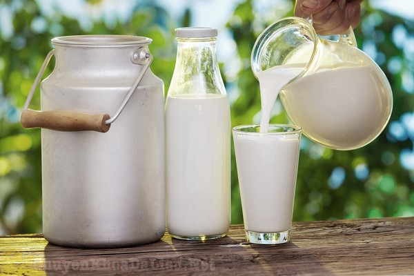 Mẹo chữa rạn da bằng sữa tươi