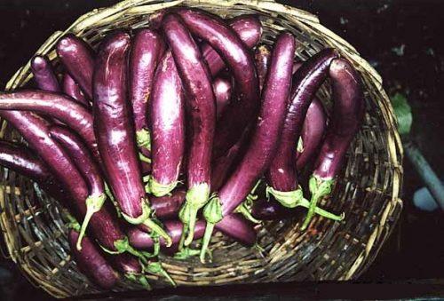 Các loại rau cà không dùng cho người bệnh vẩy nến