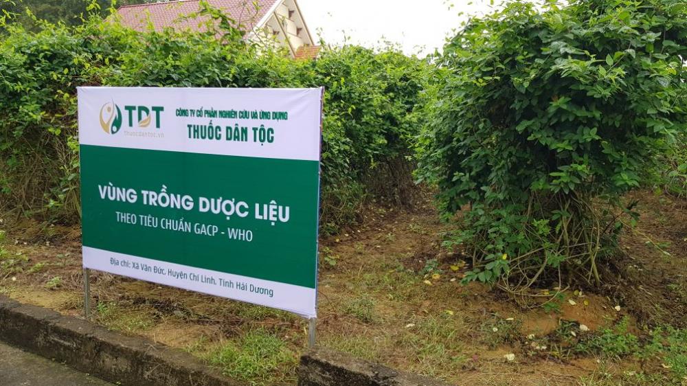 Một góc vườn dược liệu tại xã Văn Đức - Hải Dương