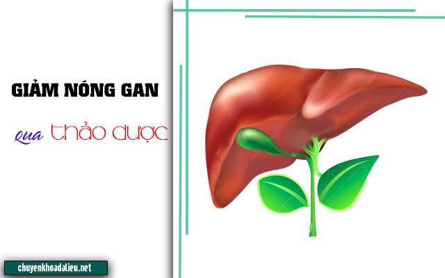 Thảo dược giảm nóng gan gây ngứa da