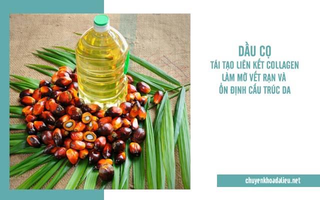Chữa rạn da lâu năm bằng dầu cọ
